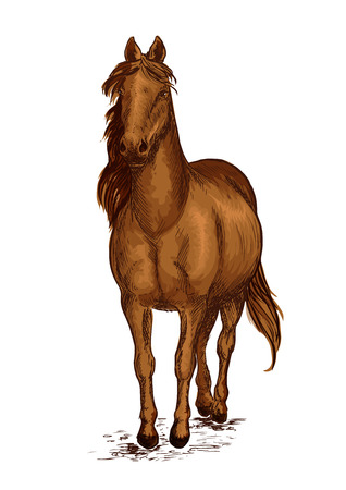 pace: Strong brown arabian horse mustang. Sport race stallion proudly pace walking on ground with wavy mane. Vector color sketch portrait Illustration