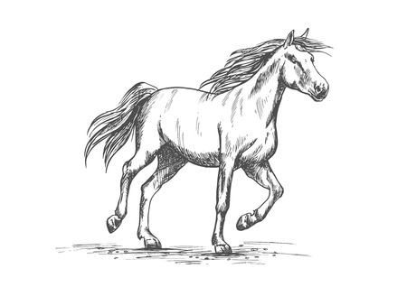 the arabian mare: Arabian horse sketch of running racehorse. Purebred mare horse is playing on a pasture. Horse racing or riding club badge, equestrian sport theme design