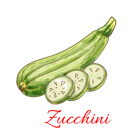 zucchini vegetable: Zucchini vegetable. Veggies isolated squash. Vector sketch vegetable marrow
