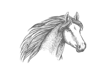 filly: Sketched horse head of purebred arabian mare horse. Equestrian sport, horse racing symbol, t-shirt print design Illustration