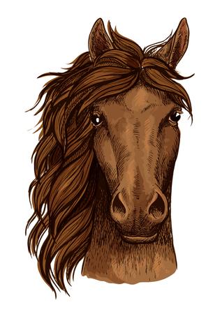 Tête brune arabian cheval de course croquis isolé Cheval. Purebred étalon icône de tête de cheval pour insigne de courses de chevaux, équestre signe compétition sportive, l'équitation conception club de badges Banque d'images - 67686860