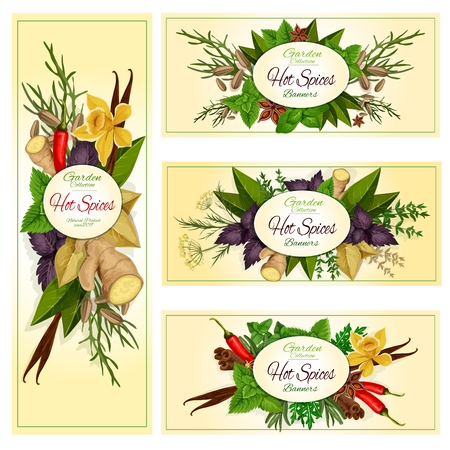 anise: Spice herb and condiment banner set of hot chilli pepper, mint, dill, rosemary, basil, anise, thyme, ginger, vanilla, cinnamon, bay, arugula, tarragon, fennel. Label, sticker, food design