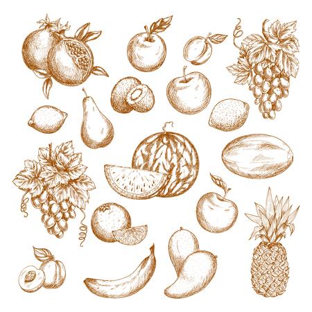 grape fruit: Fruit sketch set. Apple, orange, grape, banana, pineapple, mango, peach, plum, lemon, watermelon, pear, kiwi, melon, pomegranate, apricot, lime fruits for food, drink, vegetarian dessert recipe design