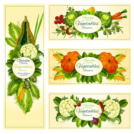 fresh vegetable: Fresh vegetable banner set with organic farm tomato, carrot, pepper, cabbage, broccoli, lettuce, mushroom, olive, corn, pumpkin, zucchini, cauliflower, spinach, green onion and artichoke