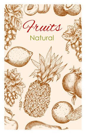 sliced: Fruit sketch poster. Natural healthy organic fruit of farm harvest. Vector fresh ripe fruits apple, apricot, pear, tropical pineapple and orange, citrus lemon with grape bunch, pomegranate and exotic banana with kiwi Illustration