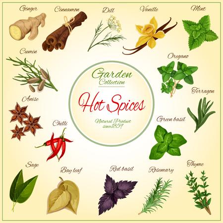 Gorące przyprawy i pikantne przyprawy zioła i przyprawy plakat z imbiru, cynamonu, kopru, wanilii i liści mięty, kminku, anyżu i oregano, papryczki chilli, terragonu lub estragonu i zielonej bazylii, szałwii i liścia laurowego, czerwonej bazylii i rozmarynu, tymianku