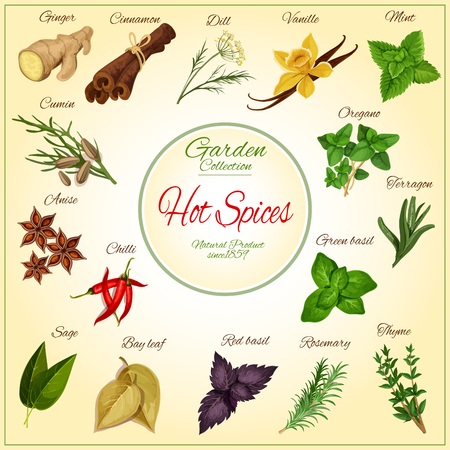 seasonings: Hot Spices and spicy herb seasonings and condiments poster of vector ginger, cinnamon, dill, vanilla and mint leaves, cumin, anise and oregano, chilli pepper, terragon or tarragon and green basil, sage and bay leaf, red basil and rosemary, thyme