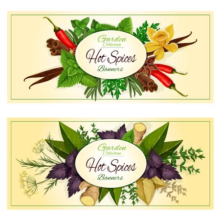 Ostrych przypraw korzennych przypraw transparenty z ziół i przypraw ziołowych kulinarnych zielona bazylia, szałwia i liść laurowy, czerwona bazylia i rozmaryn, tymianek i imbiru, cynamonu i koperkiem, wanilii i liści mięty, kminku, anyżu i oregano, paprykę chili i estragon
