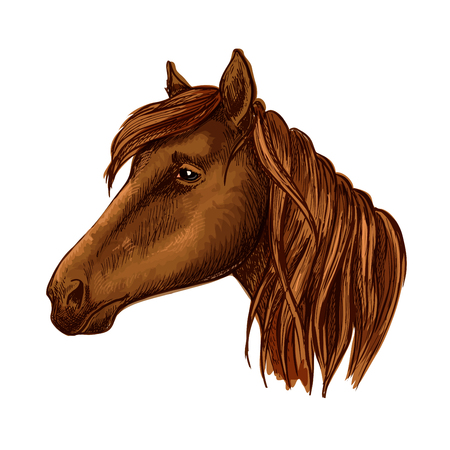 confiding: Brown horse head. Wild mustang muzzle with sad shiny eyes and wavy mane. Vector portrait