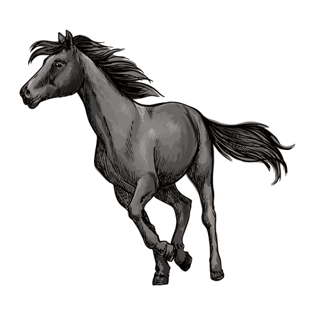 pacing: White horse running freely. Wild mustang stallion gallops against wind with waving mane and tail. Vector portrait
