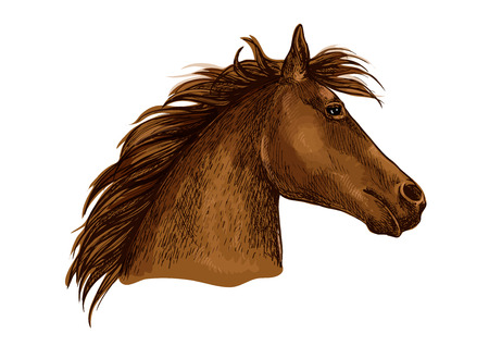 Horse portrait. Brown horse profile with wavy mane looking with beautiful eyes. Artistic vector sketch portrait