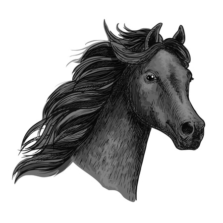 Black raven horse with proud look and holding head up high. Vector portrait of mustang equine head. Purebred powerful noble stallion with thick curly waving mane Illustration