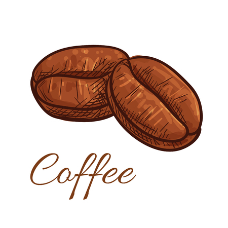 Coffee beans isolated sketch icon. Vector color elements of tasty roasted whole coffee bean for cafe, cafeteria, product emblem, decoration, package design, sticker, label