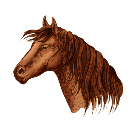 Vector portrait of brown purebred graceful hosrse mare. Beautiful bay mustang with wavy mane and calm kind looking eyes. Racehorse stallion resting in relax Illustration