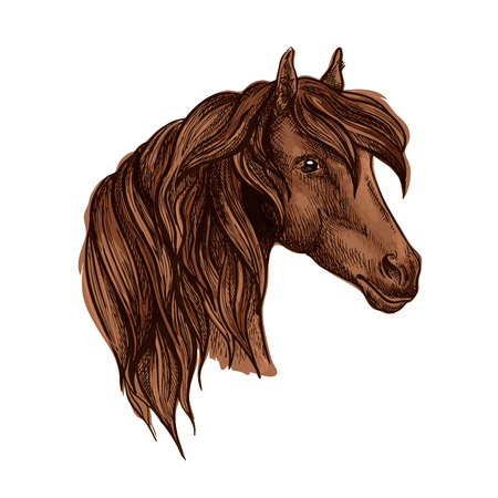 brown eyes: Vector portrait of noble brown horse mare with wavy mane and shiny kind eyes. Chestnut breed mustang stallion symbol for sport horse racing emblem