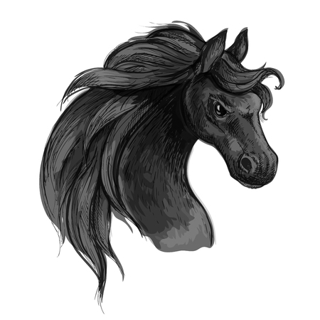 Furious wild black horse. Raging mustang with flared nostrils and burning fierce eyes. Vector sketch portrait Illustration