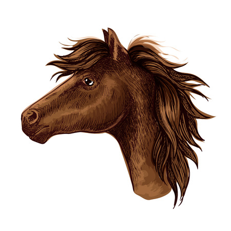 Brown arabian horse animal head. Beautiful young foal with kind eyes and spiky mane. Wild mustang stallion sketch portrait