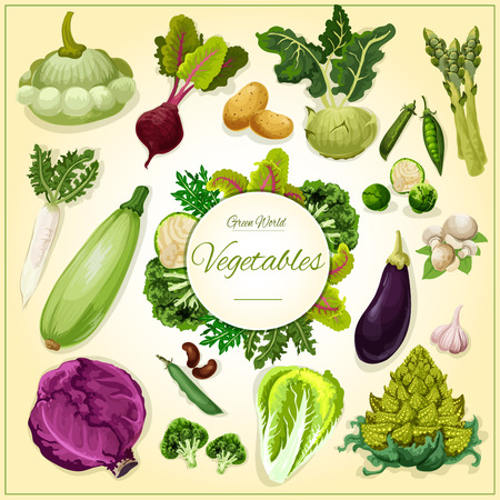 Vegetable, bean and mushroom cartoon poster. Fresh cabbage, eggplant, broccoli, beet and radish, garlic and champignon, potato, pea and zucchini, salad greens and asparagus, kohlrabi and brussel sprout, romanesco Ilustração