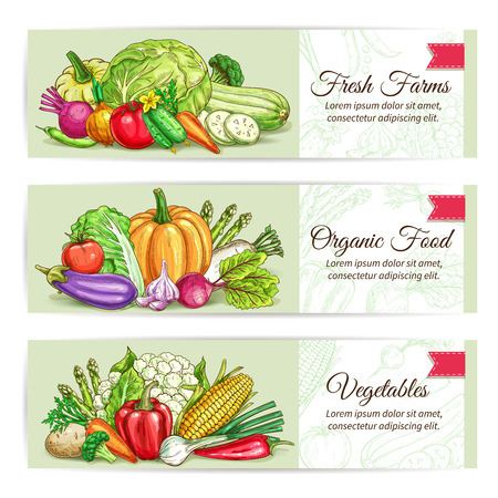 fresh: Fresh vegetables banner set. Organic farm veggies label with tomato, carrot and pepper, onion and chilli, broccoli and eggplant, potato and garlic, beet, cabbage, pumpkin. Food packaging, farm market design Illustration