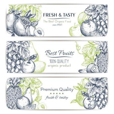 frutas tropicales: Conjunto de la fruta fresca bandera bosquejo. frutas tropicales y jardín etiquetan con manzana, naranja, plátano, uva, melocotón, piña, limón, kiwi, pera y granada con las hojas y la vid. Los alimentos y bebidas de diseño