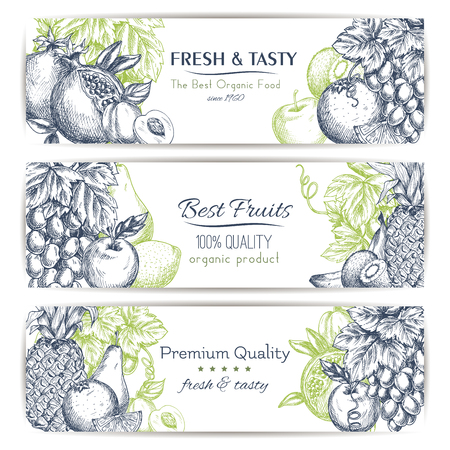 tropical garden: Fresh fruit sketch banner set. Tropical and garden fruits label with apple, orange, banana, grape, peach, pineapple, lemon, kiwi, pear and pomegranate with leaves and grapevine. Food and drink design