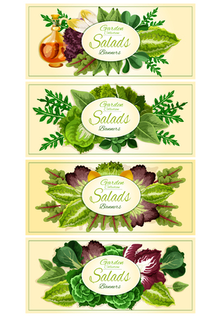 Green salad leaf banner set with fresh lettuce, spinach, chinese cabbage, iceberg lettuce, arugula, bok choy, chicory, radicchio, batavia, chard and sorrel. Vegetarian, healthy food poster design