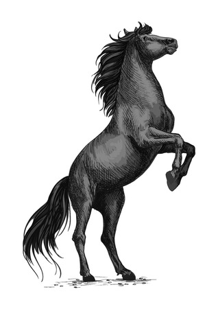 pace: Rearing horse isolated sketch. Black stallion horse of arabian breed stands up on hind legs. Equestrian sporting competition symbol, horse racing badge, t-shirt print design