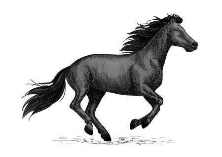 Cheval noir court galop croquis. Galloping noir étalon cheval de arabian race. Cheval symbole de course, sport équestre ou à cheval conception club de badges Banque d'images - 69806743