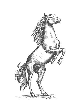 Arabian Brown Horse Vector Mustang Stallion Head Symbol For