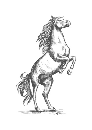 Horse mustang rearing on rear hooves. Horserace sport or ranch stallion symbol. Vector sketch for equestrian racing or races sport, horse riding and equine exhibition or contest