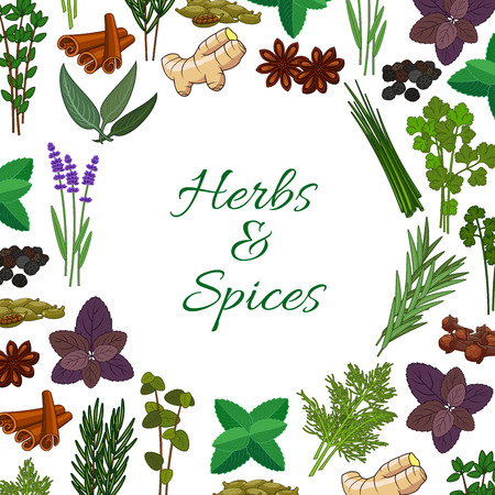 seasonings: Seasonings spicy herbs or herbal spices condiments. Rosemary and thyme, sage bay leaf, anise and oregano, basil, dill and parsley, ginger, cumin and chili pepper, aromatic vanilla with mint, cinnamon and tarragon. Vector round poster