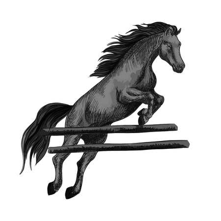 Black racing horse mustang jumping over barrier and running on horseraces. Vector sketch horse stallion for equestrian sport races and bets, horse riding, equine exhibition design