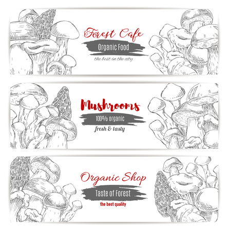 woolly: Edible mushrooms banners set of sketch champignon and gourmet morel and truffle mushroom, woolly milkcap porcini and forest cep, chanterelle, russule and milk mushroom or honey agaric. Vector design for organic mushroom shop or vegan cafe Illustration