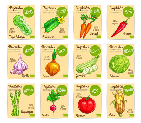 napa: Farm veggies, organic vegetables price cards labels or vector tags set of chinese cabbage napa, cucumber and carrot, chili pepper and garlic, onion and zucchini squash, asparagus, radish, tomato and corn. Farmer natural harvest Illustration