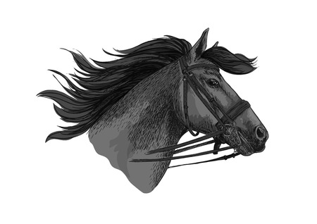 Horse in bridle running on races. Mustang trotter racing vector sketch. Stallion head symbol for sport horserace. equestrian races riding club, equine farm or ranch exhibition or contest Illustration