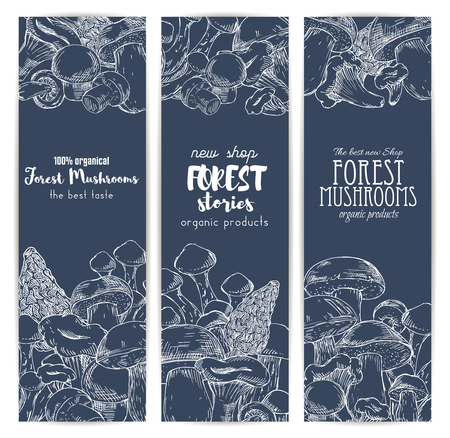 truffle: Mushroom shop banners of sketched edible forest mushrooms champignon and chanterelle, russule and milk mushroom or honey agaric, gourmet morel and truffle, woolly milkcap porcini and organic cep. Vertical vector design set