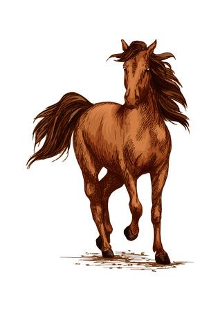 Racing o el caballo corriente. Mustang marrón de Arabia al galope o trote en carreras deportivas. granja de dibujo vectorial o rancho semental boceto potro del vector. Símbolo para la carrera de caballos club de equitación ecuestre, equino exposición o concurso Ilustración de vector