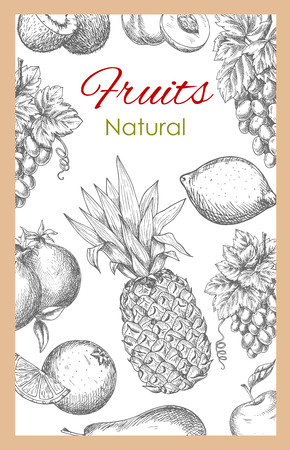 tropical garden: Fruits poster of vector sketch tropical pineapple and exotic kiwi, orange or tangerine and citrus lemon or lime, garden white and red grape, pomegranate, peach or apricot and apple. Vector farm ripe juicy fruits harvest