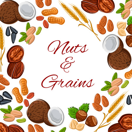 plant seed: Nuts and grain of plant seeds, cereals kernels, coconut, almond and pistachio, wheat, oat or rye ears, sunflower or pumpkin seed, peanut and cashew, hazelnut, walnut and legume bean or pea pod. Vector vegetarian or vegan nutrition food poster