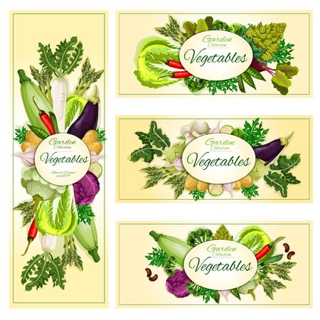 Vegetables banners set. Vegetarian healthy organic food of veggies zucchini squash, cabbage and onion leek, radish, tomato, cucumber and potato, corn and asparagus, Vector beet and chili pepper, onion, garlic and beans, romanesco broccoli