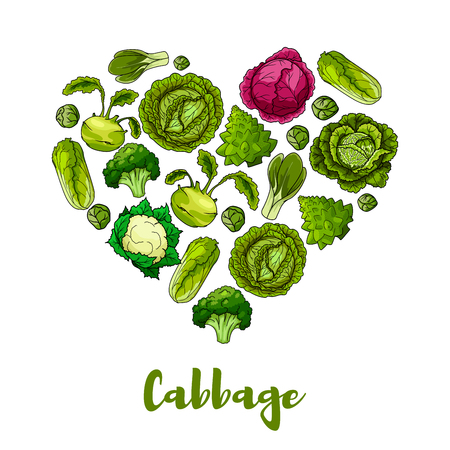 Heart of cabbage vegetables designed of leafy veggie white and red cabbage, romanesco broccoli, kohlrabi and brussels sprouts, cauliflower, chinese cabbage napa or bok choy and pak choi, kale. Vegetarian organic healthy vegetable vector poster Çizim