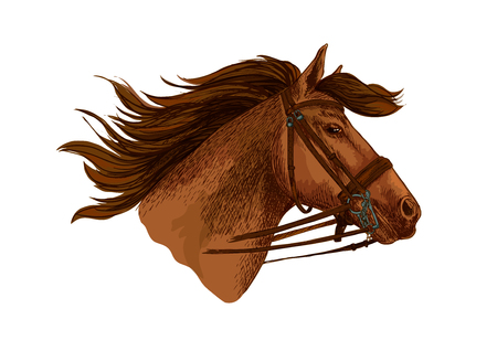 Horse head with bridle. Running or racing mustang stallion vector sketch symbol for equestrian horserace club or sport riding bets or equine exhibition design. Wild or arabian brown mare