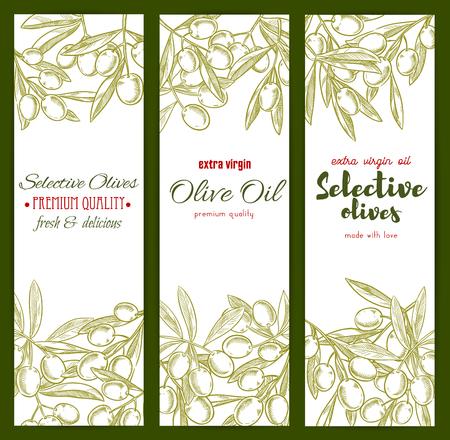 food ingredient: Olives sketch banners set. Vector green olive branches design for extra virgin olive oil bottle label design. Healthy vegetarian food and Italian, Mediterranean or Spanish cuisine ingredient