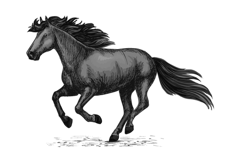 Horse racing vector sketch. Black wild mustang running on races. Farm stallion animal for equestrian horserace club or sport riding bets and equine exhibition or farm animal design