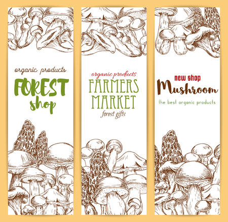 woolly: Mushrooms banners set. Vector sketch of edible mushrooms champignon, forest cep, morel, chanterelle, russule, milk mushroom honey agaric, Vegetaian or vegan food nutrition, truffle, woolly milkcap porcini. Gourmet
