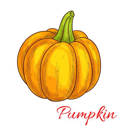 farmer market: Pumpkin sketch. Agriculture vegetable isolated icon. Ripe pumpkin gourd with green stem. Farm vegetables harvest. Vegetarian and vegan cuisine vegetable object for grocery store, farmer market or Halloween or Thanksgiving design Illustration