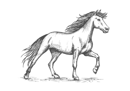 Slender white horse portrait. Wild raging mustang stomping hoof on ground. Horsrace purebred strong stallion running against wind in free gait. Vector pencil sketch, etching