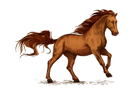 Brown arabian mustang stallion racing or galloping. Color horse vector sketch for equestrian sport, horse riding, equine design Illustration