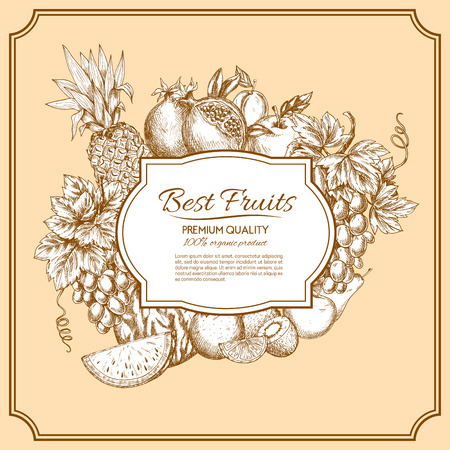 grape fruit: Fruits poster of sketched vector pineapple, grape, apple, apricot, kiwi and orange, pear and watermelon, pomegranate. Vegetarian fruit ripe harvest