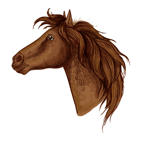 serene people: Horse royal noble profile portrait. Brown mustang with calm and proud look